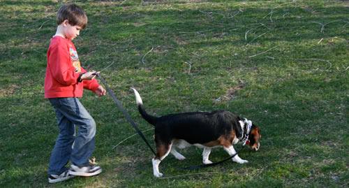Kid On Rollerblades Walking Dog