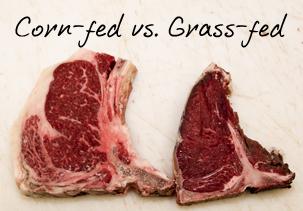 corn vs grass fed beef